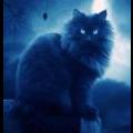 Кошка волшебника